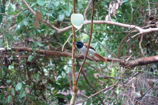 Excursión a Anse Marron: Natur