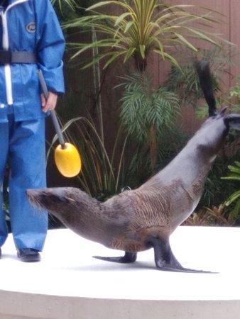 Maxell Aqua Park Shinagawa: sea lion