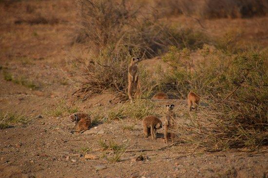 Naankuse Lodge and Wildlife Sanctuary: Meerkat manor