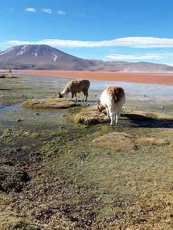Laguna Colorada, Bolivia: Bolivia