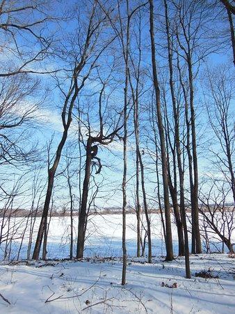 Myre-Big Island State Park: View of frozen Albert Lea lake