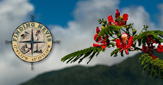 Невис: Finding Nevis   Nevis Peak and the National Flower, The flamboyant.