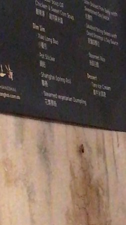 Cockroach on the menu~