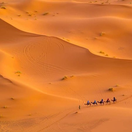 Camel Trip Morocco: Day tours from marrakech to desert morocco