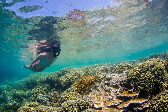 Kane'ohe Bay Guided Kayak and Snorkel...