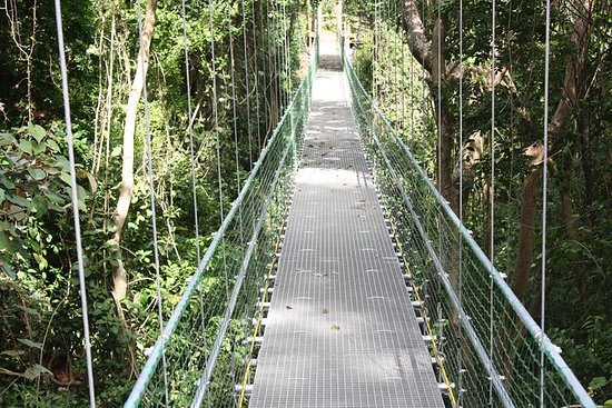 Roatan Shore Udflugt: Hanging Bridges...
