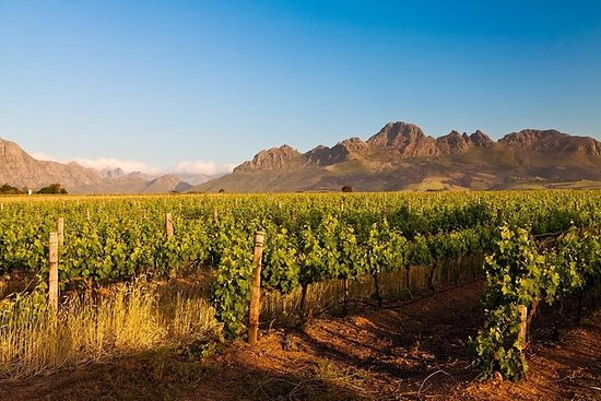 Cape Town Shore Excursion: Winelands ...