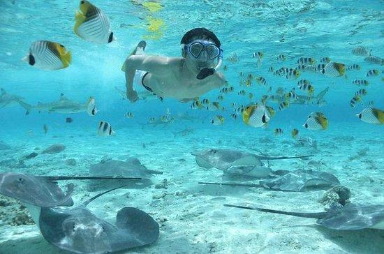 Cruzeiro de snorkel em Bora Bora com...