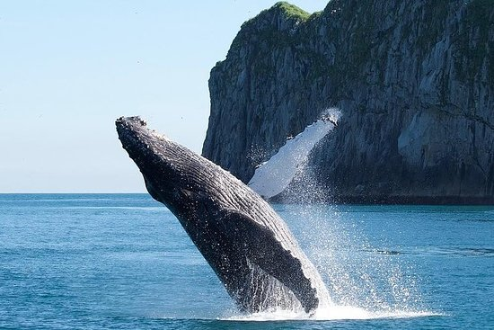 Seward Shore Excursion: Full-Day...