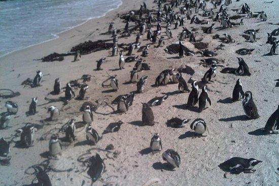 Excursão de dia guiada pelo Cabo da Boa...
