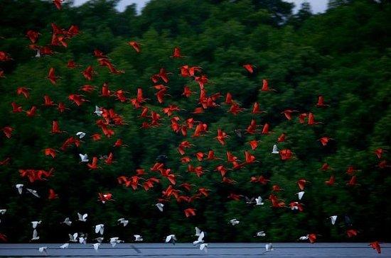 Caroni Swamp Vogelschutzgebiet Tour