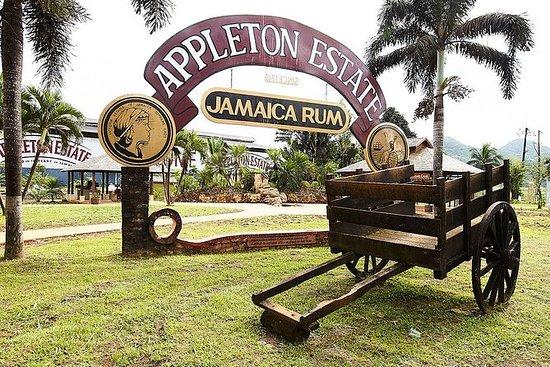 Appleton Estate朗姆酒之旅和奥乔里奥斯品酒会