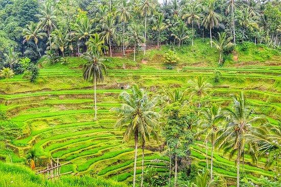 Excursion à Bali