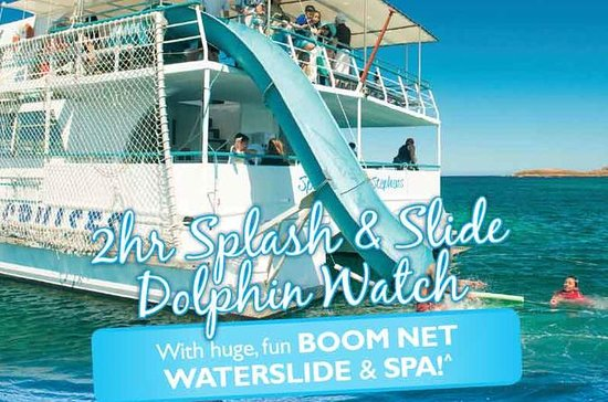 Port Stephens Dolphin Watching Cruise...