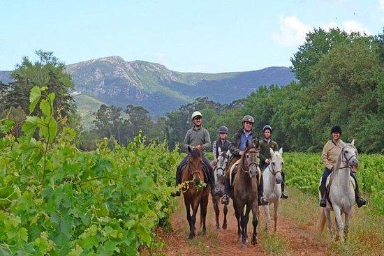 HORSEBACK RIDE I ARRÁBIDA LOURO TRAIL...