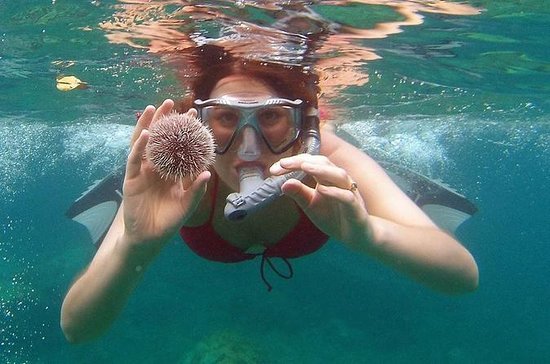 Dolphin Watching & Sea Turtles - Full...