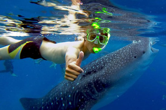 Oslob Whale shark Tours