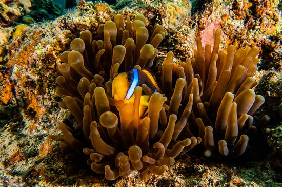 Guided dive in Eilat