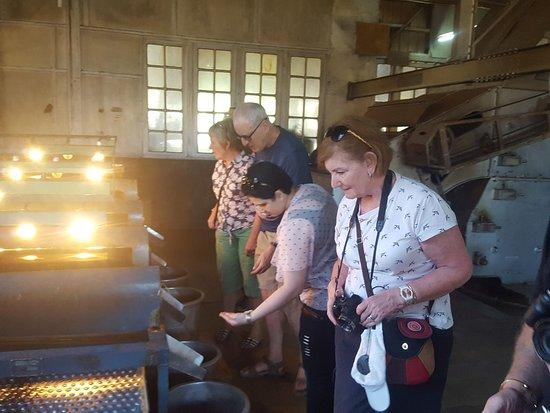 Traveller visiting Tea Factor in Munnar