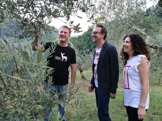Extra Virgin Olive Oil  Experience at Agriturismo Tananei
