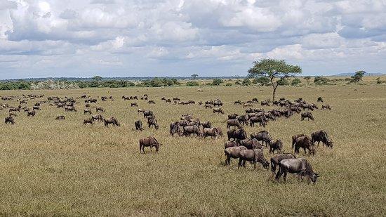 Moshi, Tanzania: Wildebeest