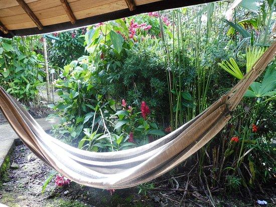 Cotundo, Ecuador: Hamac devant chaque hébergement