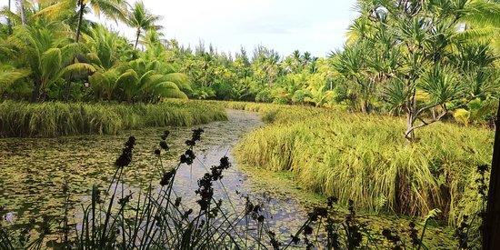 Tetiaroa, Polinesia francese: A vista do Spa