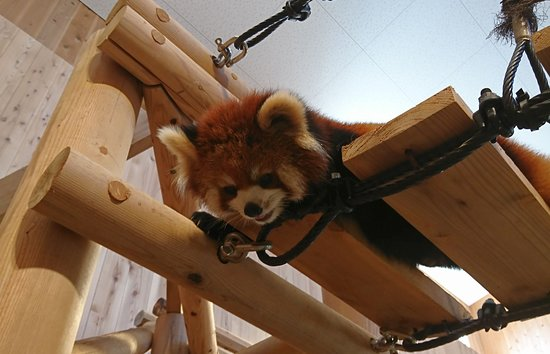 Nishiyama Zoo