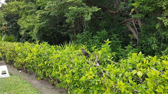 Grand Sirenis Riviera Maya Resort : Wildlife