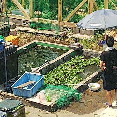 Kawashima Fishing Pond