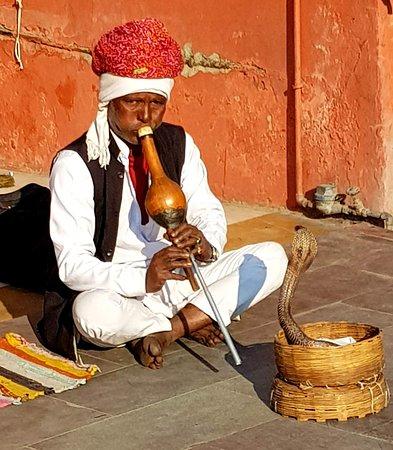 Colourful Indian Holidays: Snake - Jaipur