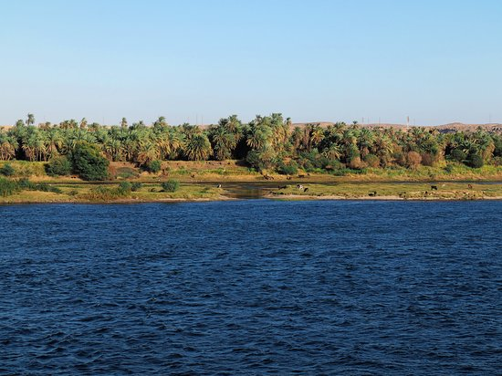 Aswan Individual - Daily Tour: Sceneries along the Nile - Cattle grazing around a swamp