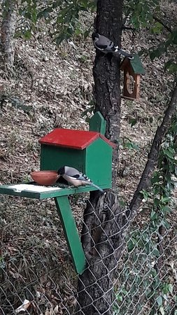 bird house In village house