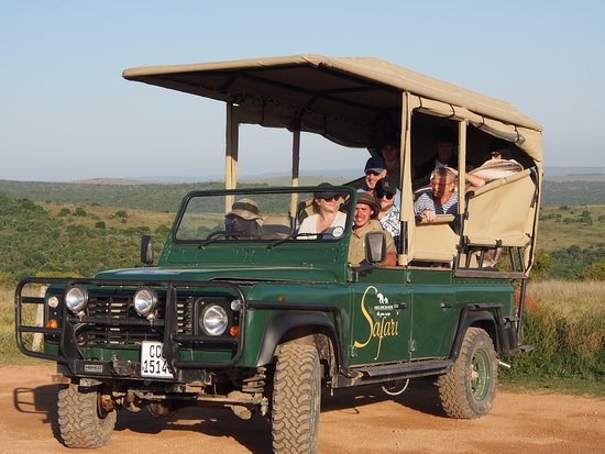 Addo, แอฟริกาใต้: Safari viewer with our open Land Rover