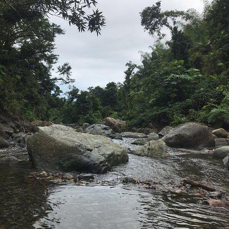 Foto de Recorrido para grupos pequeños por las zonas menos transitadas de la selva de El Yunque