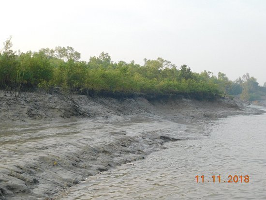 Sundarbans National Park Photos - Featured Images of