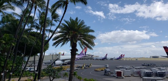 Hawaiian Airlines: Plane and palm trees