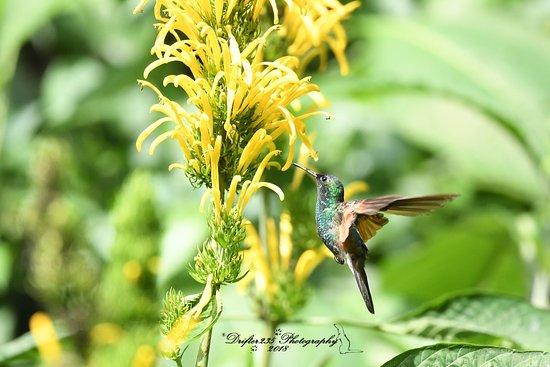 Bird Guide Cornelio