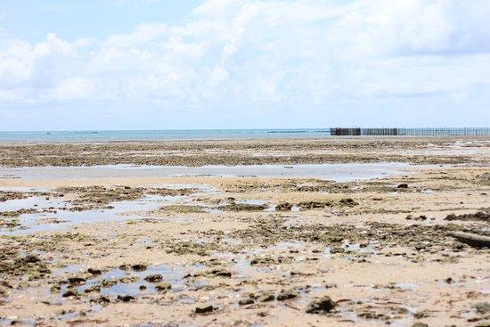 State of Alagoas: Turismo personalizado em Alagoas. Conheça nosso paraíso!! Foto: Tiago Nascimento