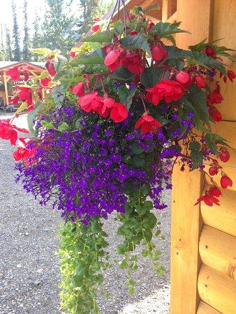 We love, love, love flowers! Begonia with lobelia and creeping jenny.