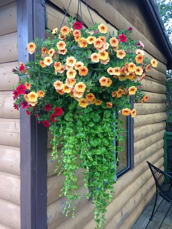 We love, love, love flowers! Calibrachoa with creeping jenny.