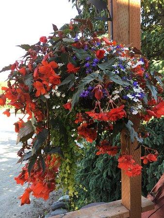 We love, love, love flowers! Beautiful Begonia's with lobelia accent.