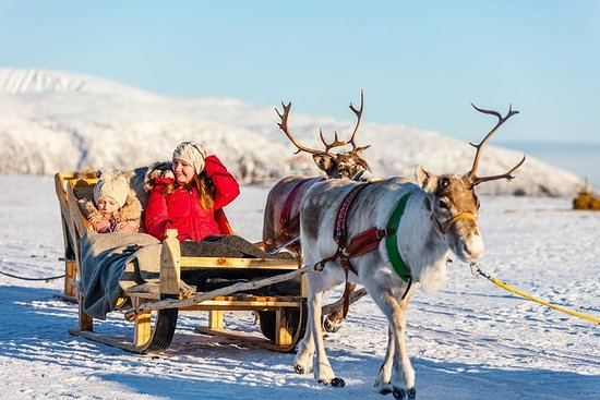 Northern Lights Reindeer Safari from...