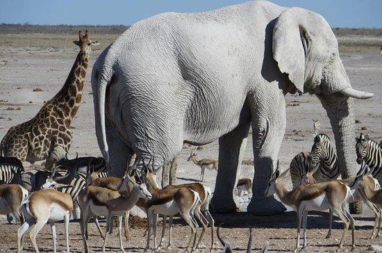 Epic Swakopmund Resort & Etosha...