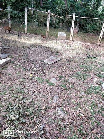 Nisargadhama Forest: deer