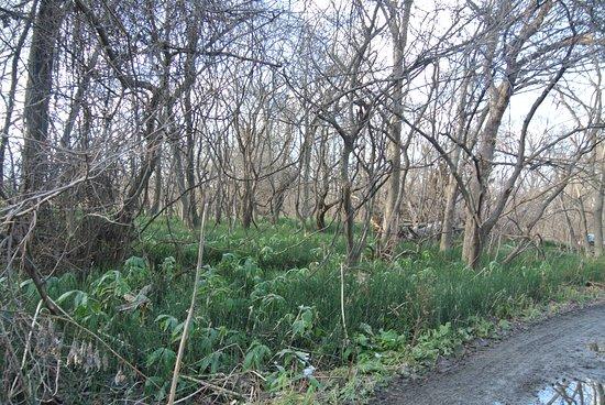 Hokudai Ruins Conserved Garden