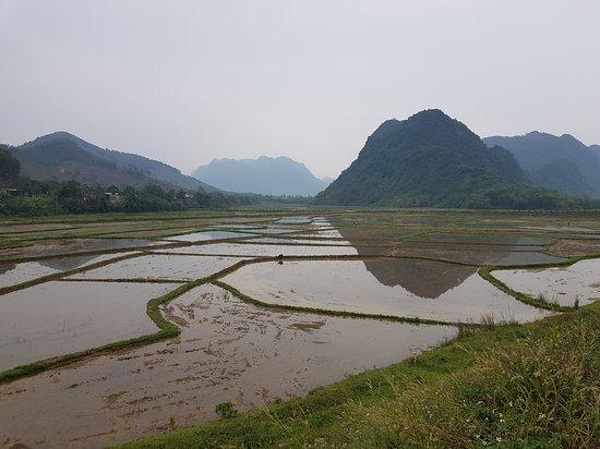 Phong Nha-Ke Bang National Park, Vietnam: Rice fields