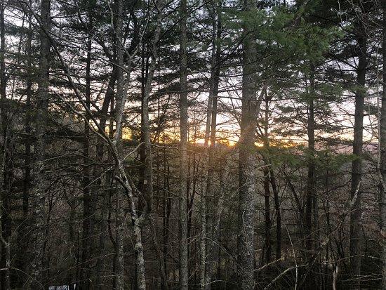 Pilot Cove : Forest Lodging Φωτογραφία
