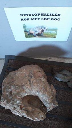 Fossil exhibition at Sutherland Planetarium