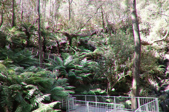 Mawbanna, Αυστραλία: The forest